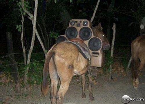 cavalo-com-som